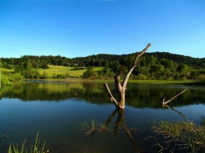 jezioro_z_patykiem.jpg